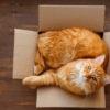 60 curiosidades sobre gatos para saber tudo sobre os bichanos