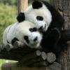 60 curiosidades sobre animais que vão te deixar de boca aberta