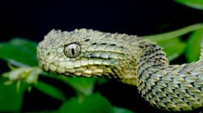 30 animais estranhos que você não conhecia até agora
