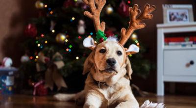 20 gifs de Natal que vão te fazer entrar no clima dessa festa